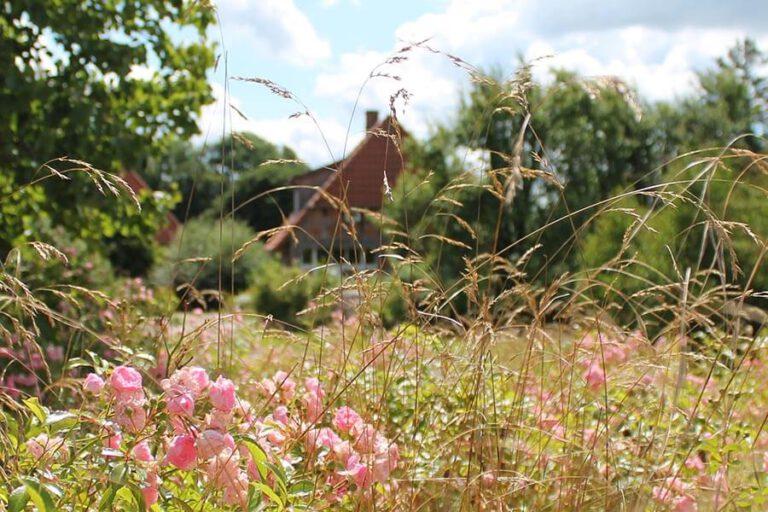 Urlaub im Landhaus Kanzler in Thandorf - Sicht von der Blumenwiese auf das Haus
